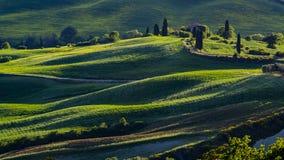 Piękny widok zieleni łąki przy zmierzchem w Tuscany i pola zdjęcia royalty free
