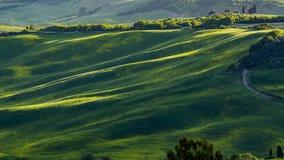 Piękny widok zieleni łąki przy zmierzchem w Tuscany i pola zdjęcie stock