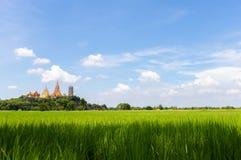 Piękny widok zieleni niebieskie niebo i pole Widok irlandczyka pole Unmilled ryż Thai gospodarstwo rolne Fotografia Stock
