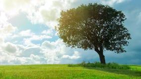 Piękny widok zielony drzewny dorośnięcie w polu pod chmurnym niebem, prognoza pogody obraz royalty free