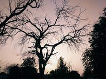 piękny wieczór świt Obraz Royalty Free
