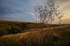 Piękny wiejski krajobraz podczas zmierzchu i niebieskiego nieba nad trawą Obrazy Royalty Free