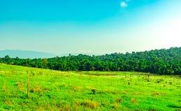 Piękny wiejski krajobraz zielonej trawy pole z białymi kwiatami na jasnym niebieskiego nieba tle w ranku na światło słoneczne dni Zdjęcie Royalty Free