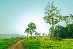 Piękny wiejski krajobraz zielonej trawy pole z białymi kwiatami, zakurzoną wiejska droga i drzewa na wzgórzu blisko c i góry zdjęcie royalty free