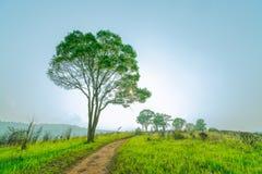 Piękny wiejski krajobraz zielonej trawy pole z zakurzoną wiejską drogą i drzewami na wzgórzu blisko jasnego niebieskiego nieba i  obrazy royalty free