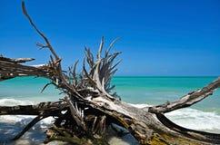 Piękny Wietrzejący Driftwood Fotografia Royalty Free