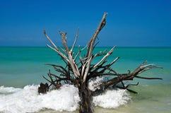 Piękny Wietrzejący Driftwood Obraz Royalty Free