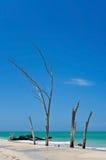 Piękny Wietrzejący Driftwood Zdjęcia Royalty Free