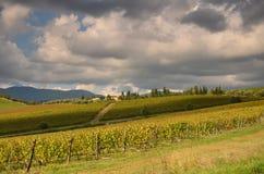 Piękny Wineyard w jesieni w Tuscany obrazy royalty free