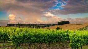 Piękny winnica przy zmierzchem Podróż wokoło Francja, bordowie zbiory wideo
