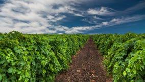 Piękny winnica przy zmierzchem Podróż wokoło Francja, bordowie zbiory
