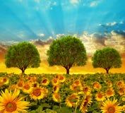 Piękny wiosna krajobraz z kwitnącym słonecznika polem, drzewami i zdjęcie royalty free