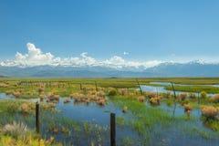 Piękny wiosna krajobraz załzawiona łąka zdjęcie royalty free