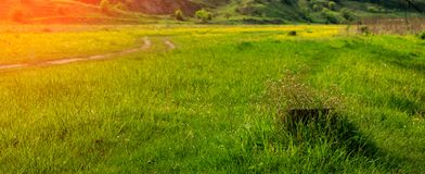 Piękny wiosna kwiatów dorośnięcie na fiszorku w świeżej zielonej trawie, Fotografia Stock