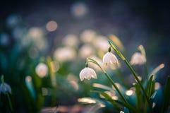 Piękny wiosna kwiat z marzycielską fantazją zamazywał bokeh tło Świeża plenerowa natura krajobrazu tapeta obraz stock