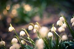 Piękny wiosna kwiat z marzycielską fantazją zamazywał bokeh tło Świeża plenerowa natura krajobrazu tapeta zdjęcie stock