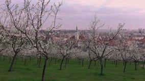 Piękny wiosna widok Praga po wschód słońca od kwitnąć Petrin wzgórze, republika czech zdjęcie wideo