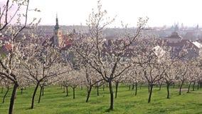 Piękny wiosna widok Praga po wschód słońca od kwitnąć Petrin wzgórze, republika czech zbiory