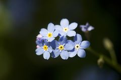 Piękny wiosny lub lato natury tło z kwitnąć błękit zdjęcia stock