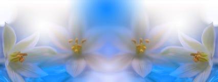 Piękny wiosny natury okwitnięcie Piękny zamazany natury tło, sztandar dla strony internetowej z ogrodowym pojęciem Wellness zdrój zdjęcia royalty free
