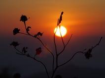 Piękny wschód słońca Obraz Royalty Free