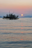 Piękny wschodu słońca i sylwetki drzewo Obrazy Royalty Free