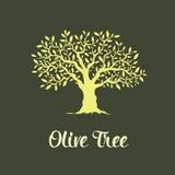 Piękny wspaniały drzewo oliwne Zdjęcie Stock