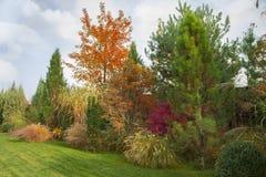 Piękny wysokogórski wzgórze z drzewami, krzakami i ornamentacyjnymi trawami w jesień parku, fotografia royalty free