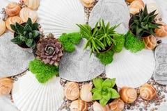 Piękny wystrój z tłustoszowatymi roślinami, mech i seashells, zdjęcia stock