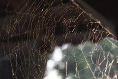 Piękny wzór pajęczyny w promieniach miękki wieczór sunse obrazy royalty free