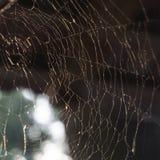 Piękny wzór pajęczyny w promieniach miękki wieczór sunse zdjęcie stock