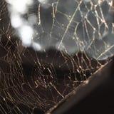 Piękny wzór pajęczyny w promieniach miękki wieczór sunse zdjęcia royalty free