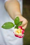 Piękny wzrastał z kobiet rękami Fotografia Royalty Free