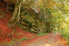 Piękny złoty jesień krajobraz Obraz Royalty Free