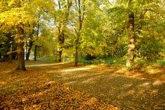 Piękny złoty jesień las zdjęcie stock