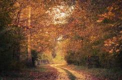 Piękny złoty las jesień dzień zdjęcia royalty free