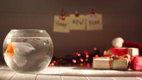 Piękny złoty rybi dopłynięcie w akwarium, prezenty wokoło, odświętność nowy rok, Wakacyjne dekoracje zbiory