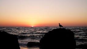 Piękny złoty zmierzchu wschód słońca na morzu, uzupełnia spokój, latający seagulls zbiory wideo