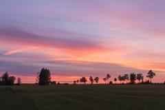 piękny zachód słońca Drzewa na zmierzchu w lata tle Fotografia Royalty Free