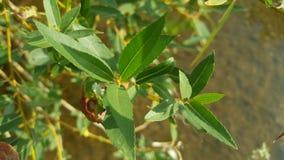 Piękny zakończenie up strzelał świeża zielona agawy roślina Roślina z ostrze zieleni liśćmi zdjęcia stock
