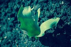 Piękny zakończenie w górę fotografii roślina Obrazy Royalty Free