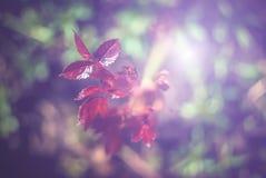 Piękny zakończenie w górę fotografii rośliny i kwiaty z ostrożnie kształtować teren Fotografia Stock