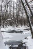 Piękny zalewający las w zima czasie Zdjęcie Royalty Free