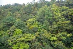 Piękny zamazany świeży zielony drzewny las na górze dla tła zdjęcie stock