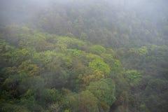 Piękny zamazany świeży zielony drzewny las z mgłą na górze dla tła obrazy royalty free