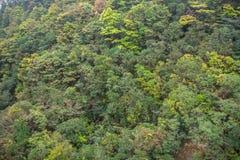 Piękny zamazany luksusowy drzewny las na górze dla tła fotografia royalty free