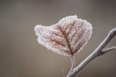 Piękny zbliżenie lodowi kryształy na jesień liściu Zdjęcie Royalty Free