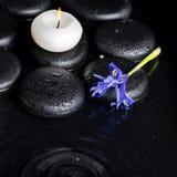 Piękny zdroju pojęcia wierzchołka puszek irysowy kwiat obraz royalty free