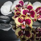 Piękny zdroju pojęcie zen kamienie, kwitnie gałązki orchidei, phala Obrazy Stock
