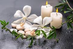 Piękny zdroju wciąż życie delikatny biały poślubnik, gałązki passio Zdjęcie Royalty Free